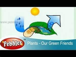 Tree Plantation - Green Pakistan Short English Essay